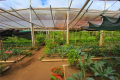 business-organic-farm-for-sale-11