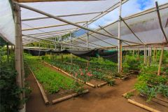 business-organic-farm-for-sale-12