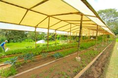 business-organic-farm-for-sale-17