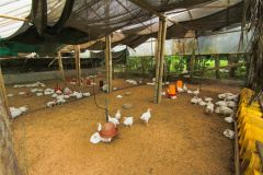 business-organic-farm-for-sale-2