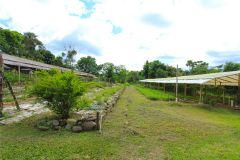 business-organic-farm-for-sale-20
