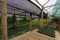 business-organic-farm-for-sale-7