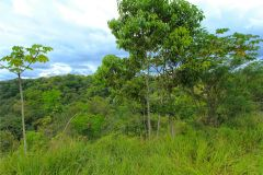 23-acre-organic-farm-for-sale-in-Panama-10