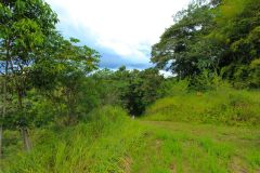 23-acre-organic-farm-for-sale-in-Panama-11