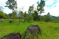 23-acre-organic-farm-for-sale-in-Panama-12