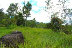 23-acre-organic-farm-for-sale-in-Panama-13