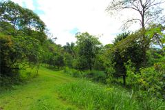 23-acre-organic-farm-for-sale-in-Panama-14