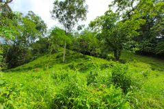 23-acre-organic-farm-for-sale-in-Panama-16