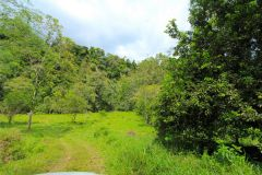 23-acre-organic-farm-for-sale-in-Panama-17