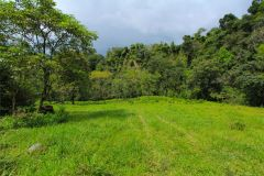 23-acre-organic-farm-for-sale-in-Panama-18