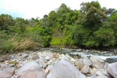 23-acre-organic-farm-for-sale-in-Panama-20