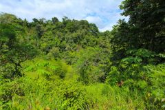 23-acre-organic-farm-for-sale-in-Panama-24
