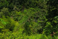 23-acre-organic-farm-for-sale-in-Panama-25