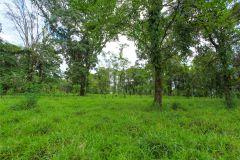 23-acre-organic-farm-for-sale-in-Panama-7