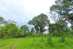 23-acre-organic-farm-for-sale-in-Panama-8