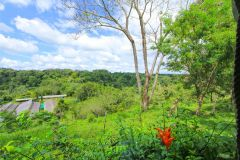 23-acre-organic-farm-for-sale-in-Panama-9