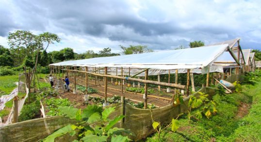 organic farm business for sale in panama